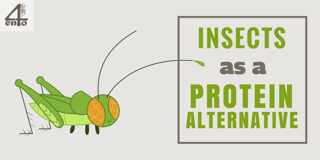 Insects as an Alternative Protein