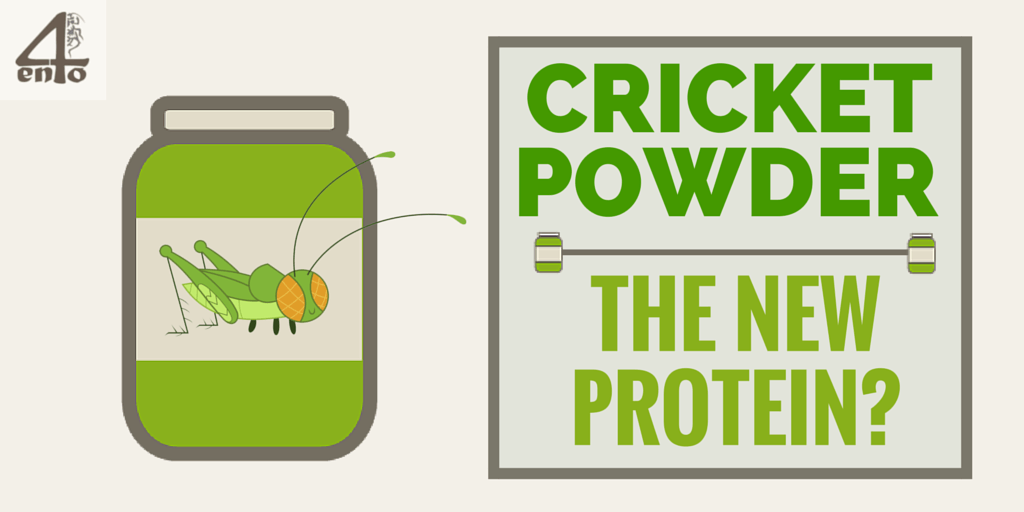 Cricket Powder - The New Protein?