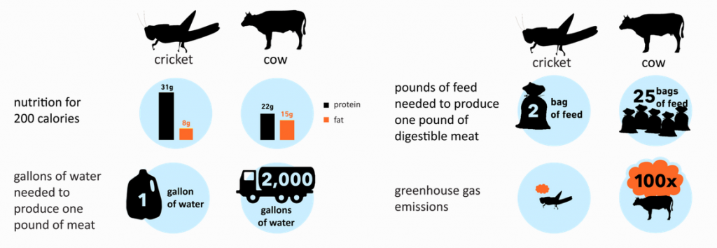 Crickets vs Cows - Resources Infographics