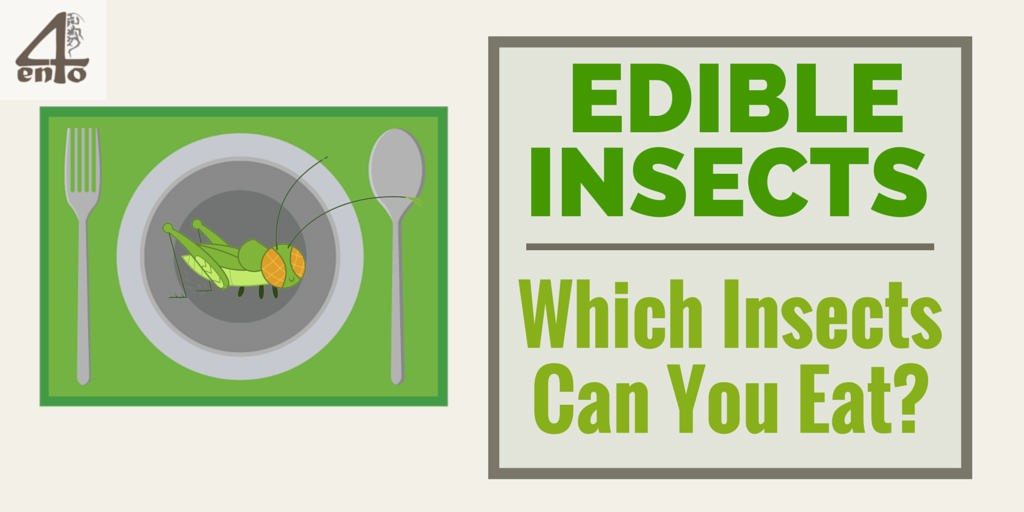 Edible Insects - Which Ones Can You Eat?