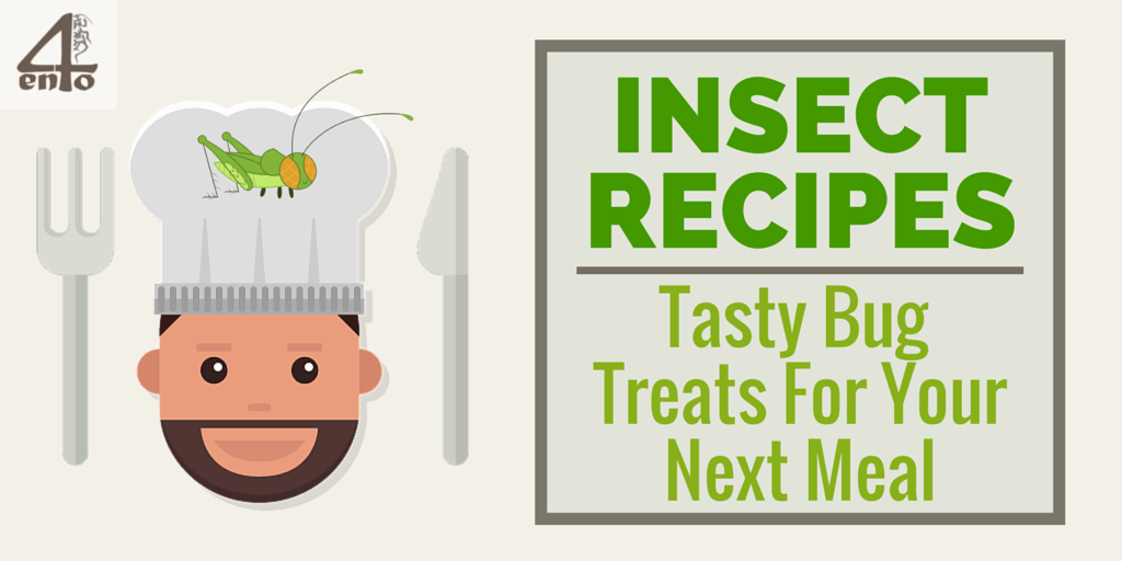Insect Recipes - Tasty bugs for your next meal