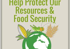 How Insects Can Help Preserve Our Resources & Increase Global Food Security