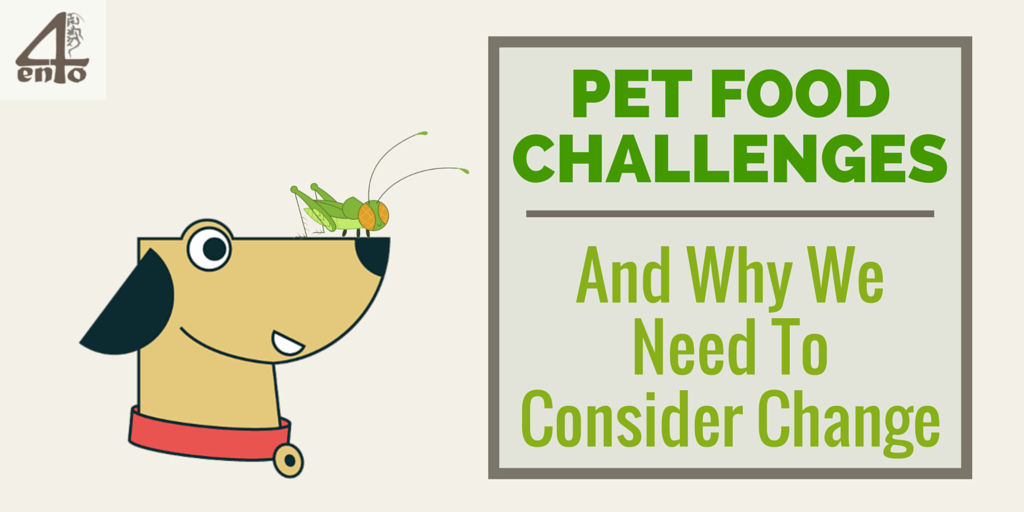 Pet Food Challenges- And WHy We Need Change