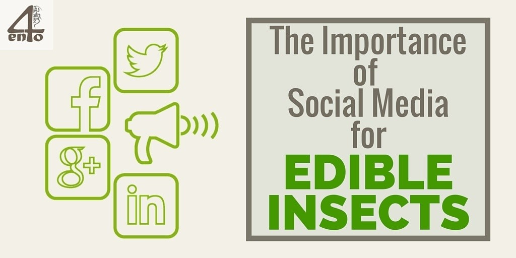 The Importance of Social Media for Edible Insects
