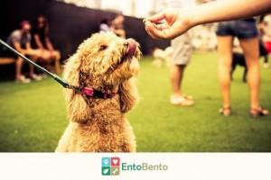 Ento Bento Feeding Dog Treats