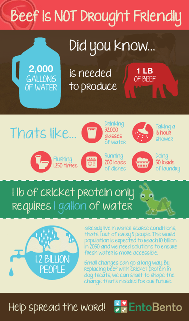 entobento-infographic-sustainability