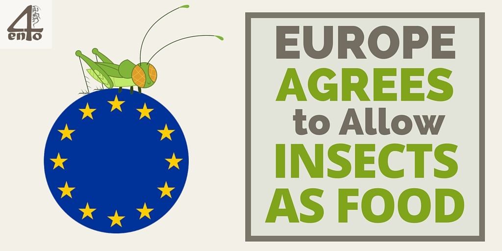 EU Agrees to Allow Insects as Food