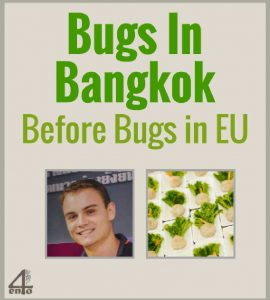 Bugs in Bangkok before Bugs in Europe!