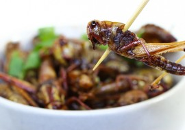 Edible Insects: Nutritional Ingredients are Moving Beyond Traditional Offerings