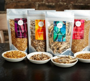 Grub Edible Insect Pack