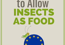 Europe Agrees to Allow Insects as Food